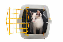Kitten in pet carrier. Cat closed inside pet carrier isolated on white background Royalty Free Stock Images