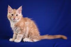 Kitten pet cat stock photo