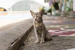 Kitten Phang Nga Bay stock fotografie