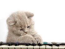 Kitten and piano. On white background Stock Images