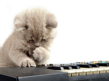 Kitten and piano Stock Photos