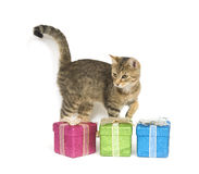 Kitten picking a present Royalty Free Stock Photography