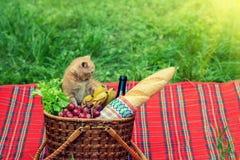 Kitten at picnic Royalty Free Stock Image