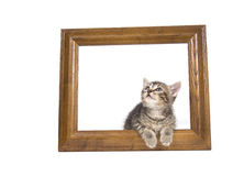 Kitten in a picture frame Royalty Free Stock Images