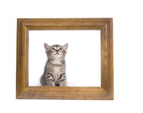 Kitten in a picture frame Stock Photo