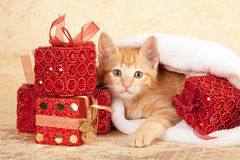 Kitten with pile of presents Royalty Free Stock Images