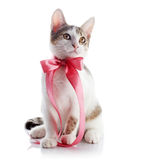Kitten with a pink bow. Stock Photo