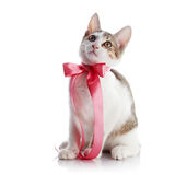 Kitten with a pink bow. Stock Image