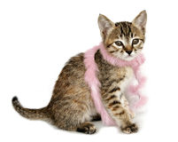 Kitten in Pink Feather Boa Stock Photography