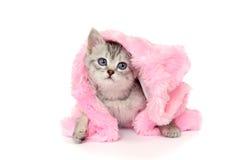 Kitten in pink fur coat. Isolated on white Stock Photos
