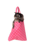 Kitten in pink hand bag Royalty Free Stock Photography