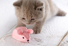 Kitten and pink mouse Stock Images
