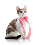 The kitten with a pink tape Royalty Free Stock Image