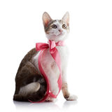 The kitten with a pink tape sits on a white background. Stock Images