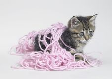 Kitten and pink wool Royalty Free Stock Images