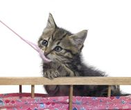 Kitten and pink wool Royalty Free Stock Photo