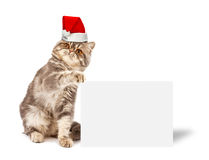 Kitten with placard Royalty Free Stock Photos
