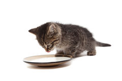 Kitten with plate of sour cream Royalty Free Stock Photo