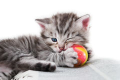Kitten play with a ball on a book