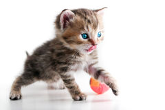 Kitten play ball - isolated stock photo