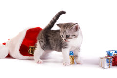 Kitten play with gifts Royalty Free Stock Photography