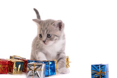 Kitten play with gifts Stock Photo