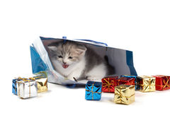 Kitten play with gifts Stock Photos