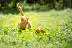 Kitten play outdoor Royalty Free Stock Image