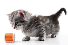 Kitten play with sewing bobbin Royalty Free Stock Photography