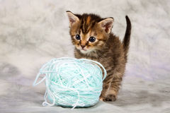 Kitten play with wool Stock Photos