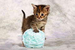 Kitten play with wool Royalty Free Stock Photography