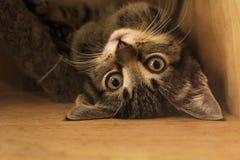 Kitten. A playful kitten playing and being cute Stock Photos