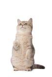 Kitten playing Stock Photography
