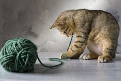 Kitten playing. With a green wool ball on a marble surface and gray background Royalty Free Stock Images