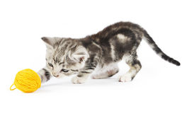 Kitten playing. Grey kitten playing with a yellow clew  on white Royalty Free Stock Image