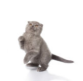 Kitten playing Stock Photo