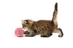 Kitten playing Royalty Free Stock Photos