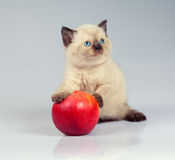 Kitten playing with apple Royalty Free Stock Photos