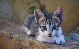 Kitten Royalty Free Stock Photos