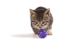 Kitten playing ball. A tabby kitten playing with a purple ball Royalty Free Stock Images