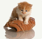 Kitten playing with ball glove. Six week old kitten standing on a baseball glove royalty free stock photography