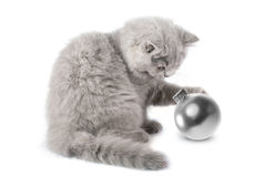 Kitten playing with ball isolated Stock Photography