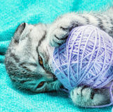 Kitten playing with a ball of thread. Kitten playing with a ball of colored thread Royalty Free Stock Images