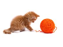 Kitten playing with ball of wool Stock Photos