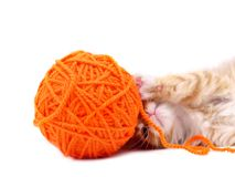 Kitten playing with ball of wool Stock Images