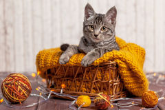 Kitten playing with a ball of wool Royalty Free Stock Photos
