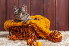 Kitten playing with a ball of wool Stock Photo