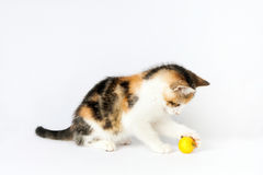 Kitten playing with a ball of yarn Stock Photos