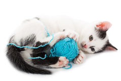 Kitten playing with ball of yarn Royalty Free Stock Photo