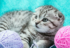 Kitten playing with a ball of yarn Stock Photography